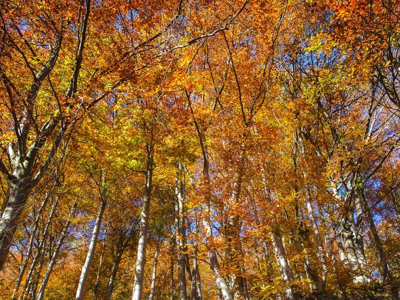oasi zegna foliage