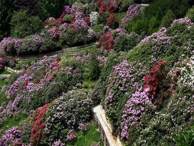 Oasi Zegna - Fioritura e Foliage