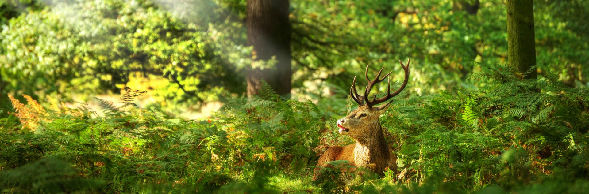 oasi zegna splendida natura