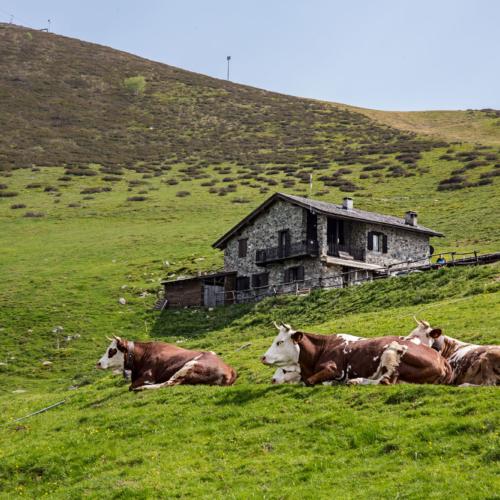 Agriturismo Alpe Moncerchio